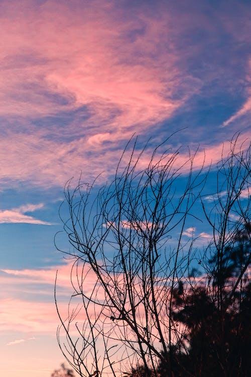 Foto stok gratis bagus, berwarna merah muda, biru