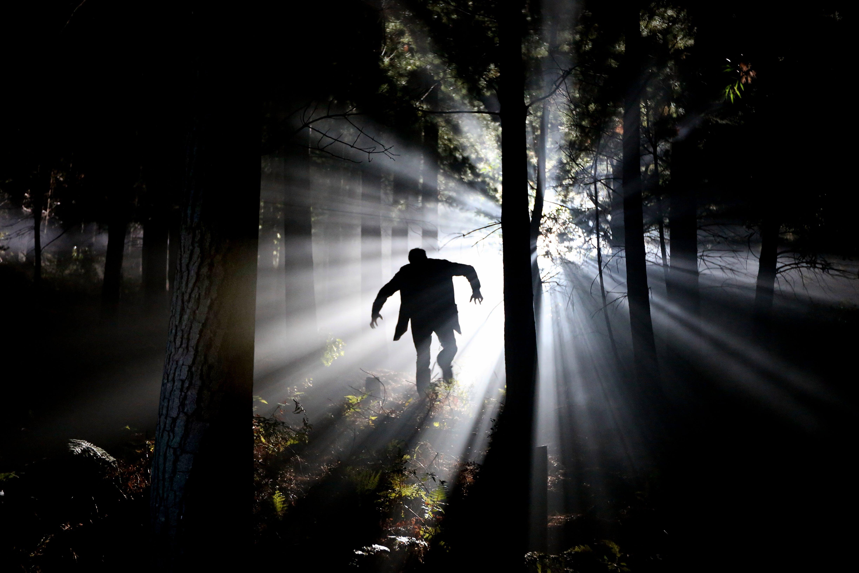 Kostenloses Stock Foto zu bäume, dunkel, hinterleuchtet, holz