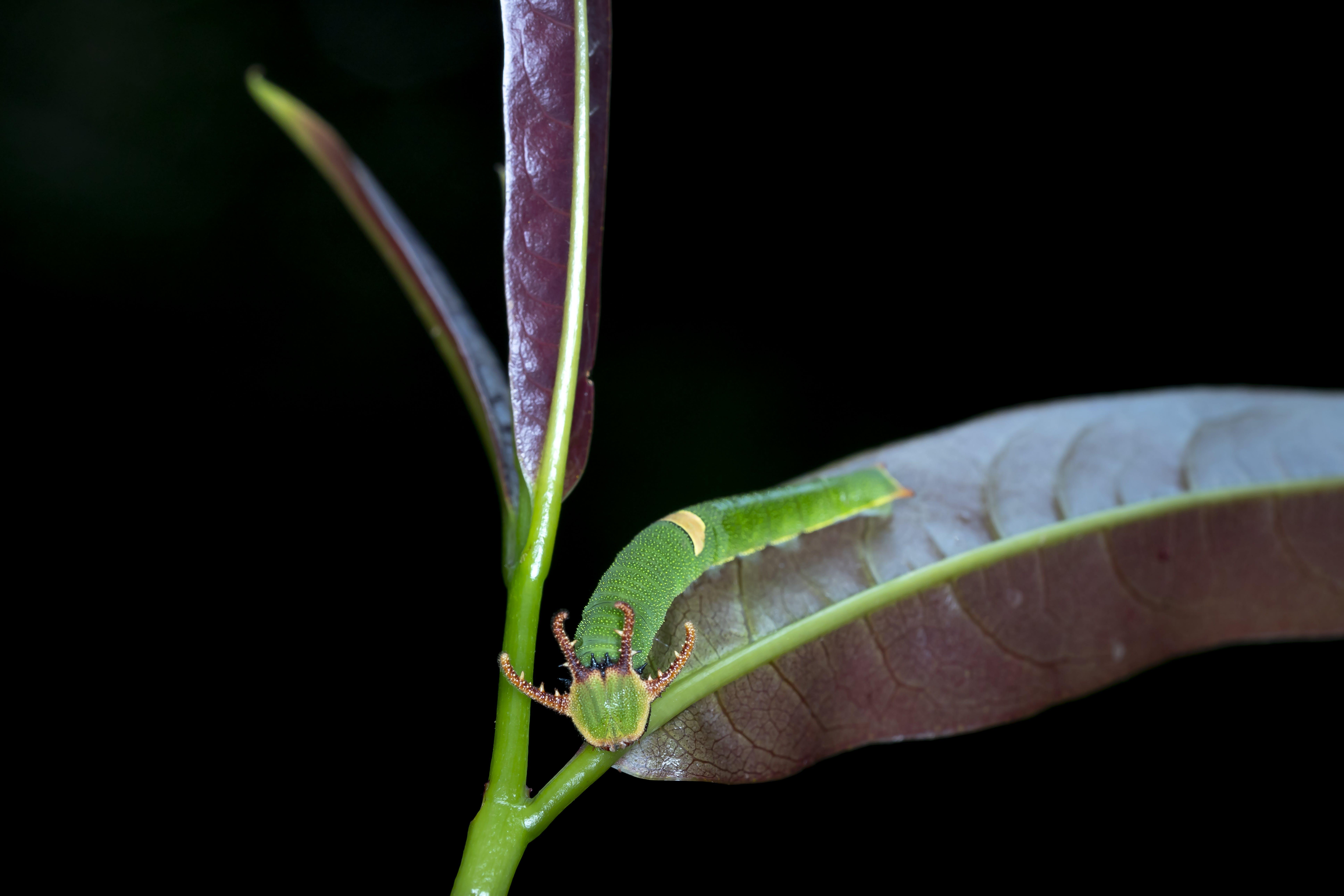 害蟲, 小蟲, 幼蟲, 微距攝影 的 免费素材照片