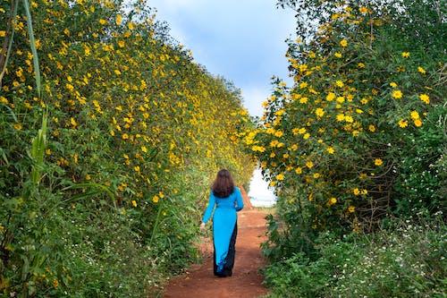 Fotobanka sbezplatnými fotkami na tému chôdza, flóra, kvety, nádherné kvety