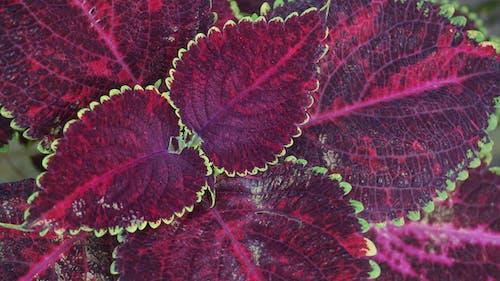 Fotobanka sbezplatnými fotkami na tému dekoratívna rastlina, detailný záber, dizajn, farby