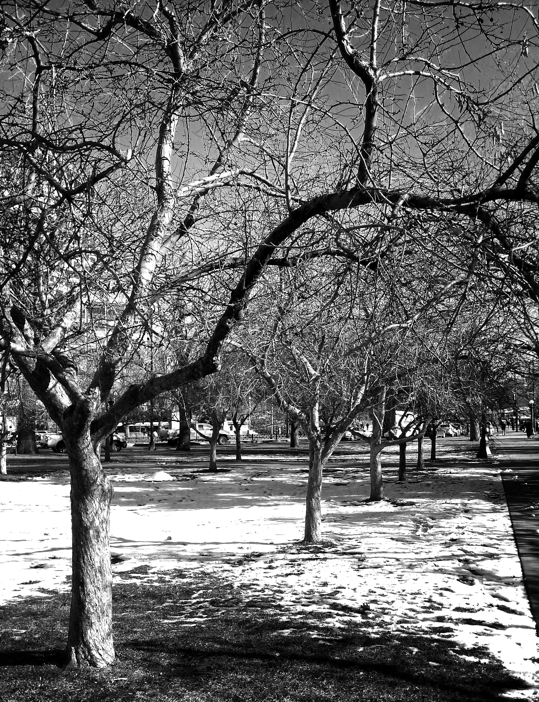 Free stock photo of black&white, black-and-white, cars, colorado