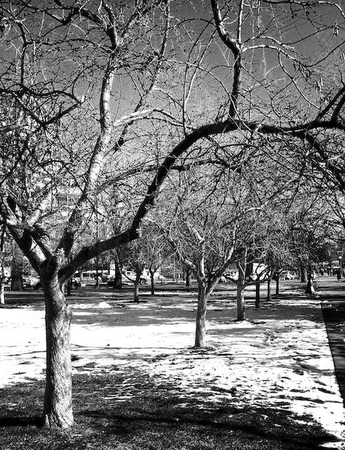 Darmowe zdjęcie z galerii z chodnik, chodzenie, colorado, czarno-biały