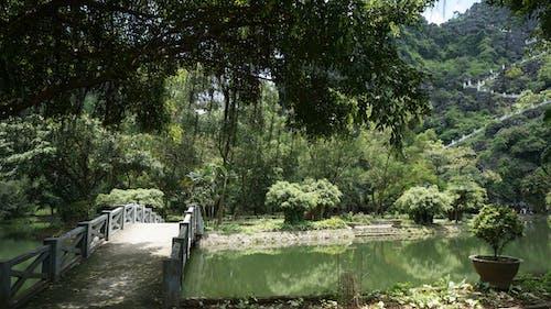 Free stock photo of bridge, green, mountain, nature