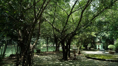 Kostenloses Stock Foto zu bäume, grün, natur, schatten