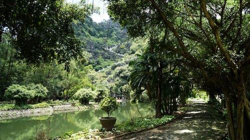 Kostenloses Stock Foto zu bäume, berg, grün, ninhbinh