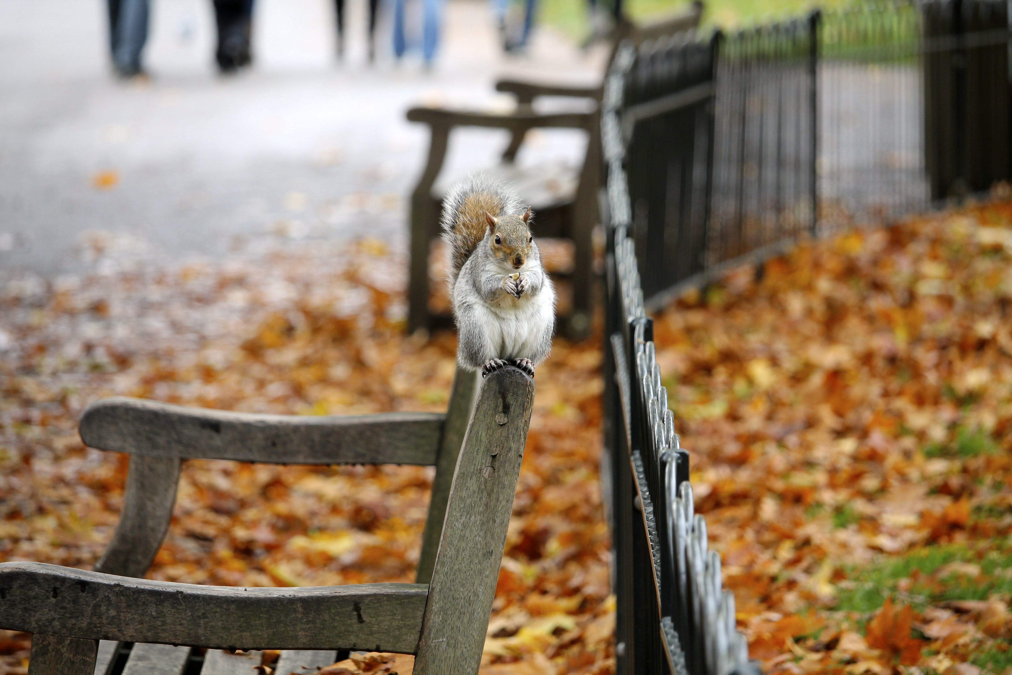 Selective Focus Photography of Squirrel Sitting on Armchair
