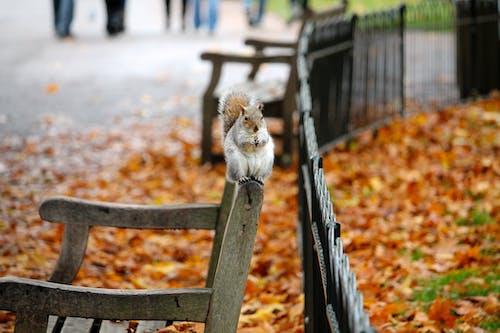 Ảnh lưu trữ miễn phí về Băng ghế, con vật, công viên, hoang dã