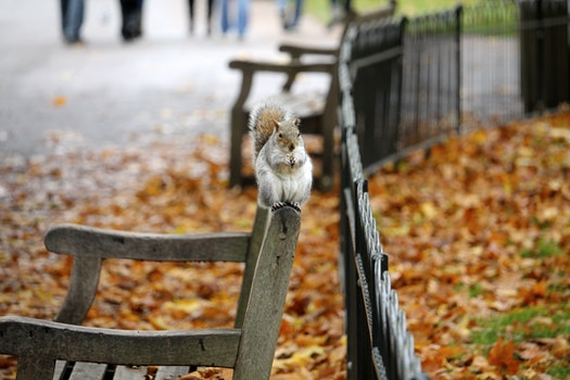 Free stock photo of bench, animal, park, leaves