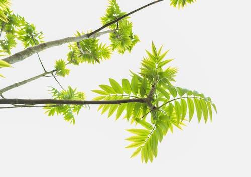 Бесплатное стоковое фото с ветвь, завод, красивый, листья