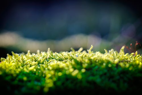 Immagine gratuita di concentrarsi, felce, felce verde, flora