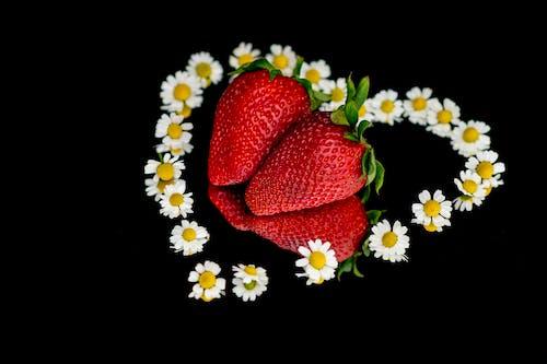 Δωρεάν στοκ φωτογραφιών με όμορφα λουλούδια, φράουλες, χαμομήλι