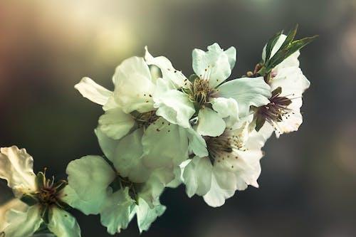 Δωρεάν στοκ φωτογραφιών με λουλούδι δέντρο