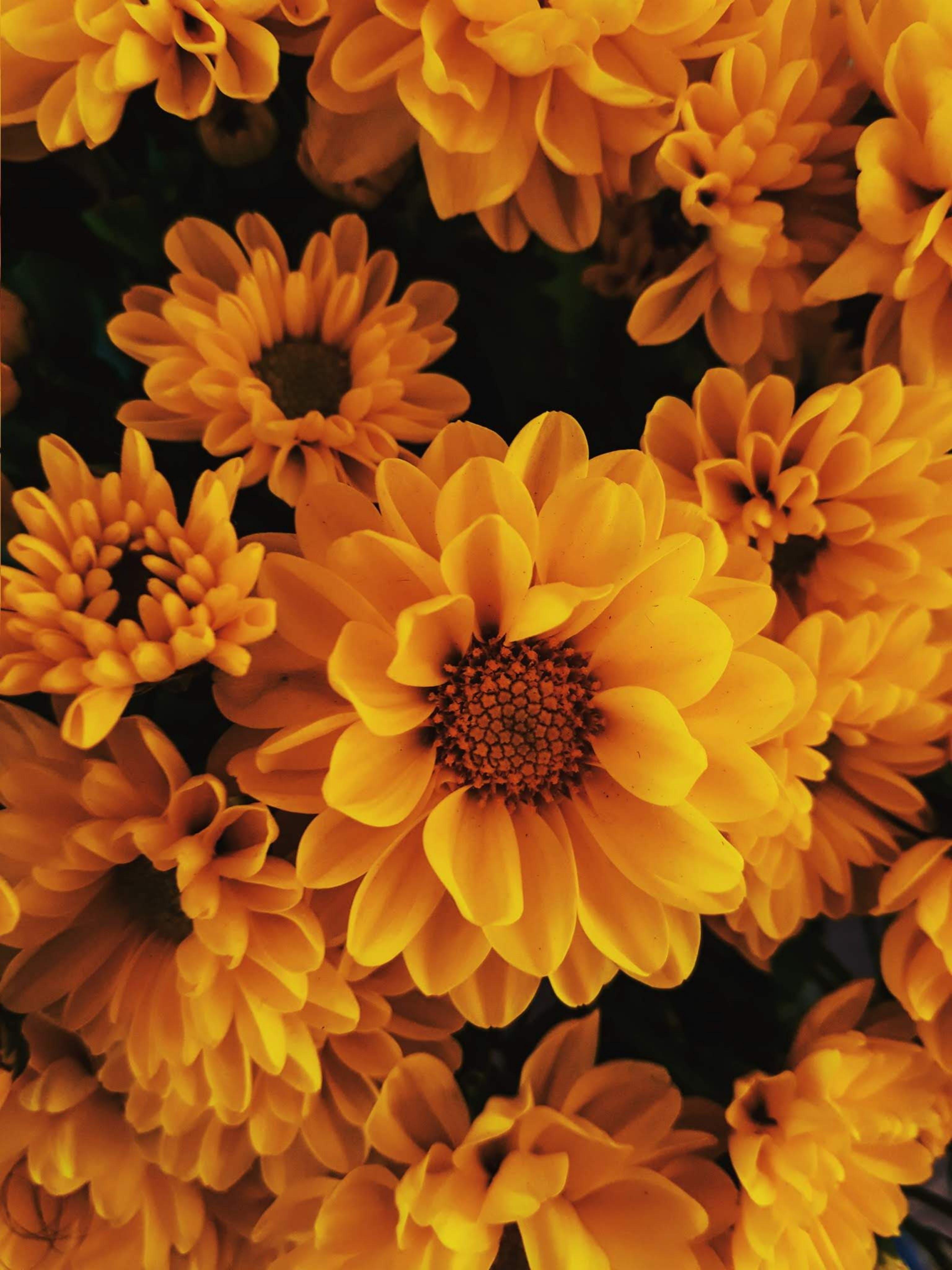 Gratis arkivbilde med blomster, blomsterblad, blomstre, bukett