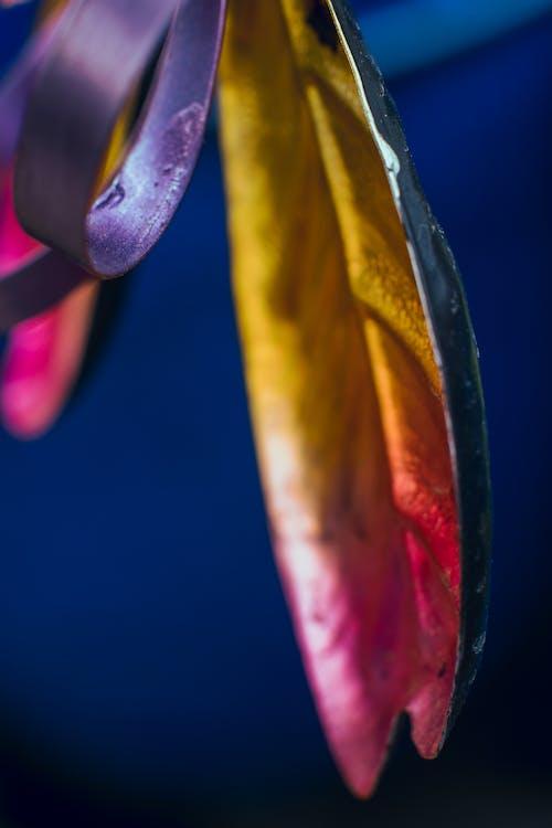 Immagine gratuita di arte, biologia, botanica, colorando