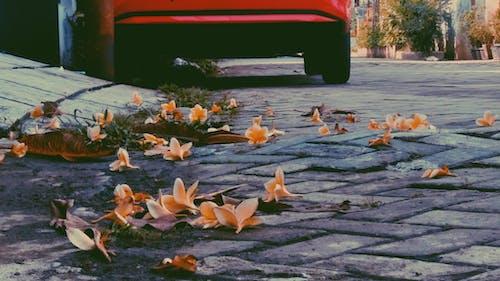 Foto d'estoc gratuïta de col·lecció vintage, cotxe, fotografia, fotògrafs