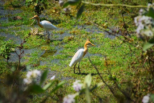 Free stock photo of birds, india, nature
