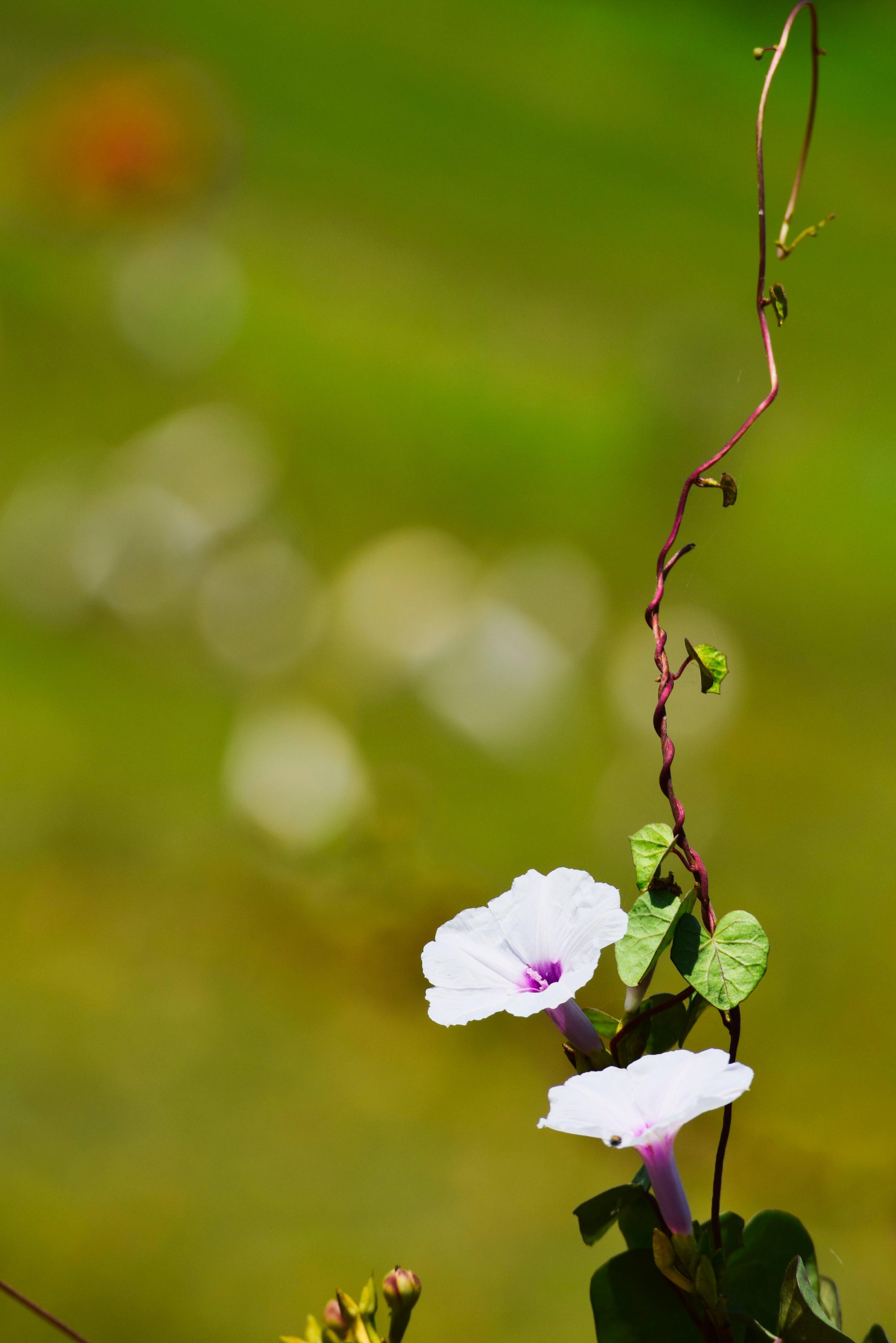 flowers, india, nature
