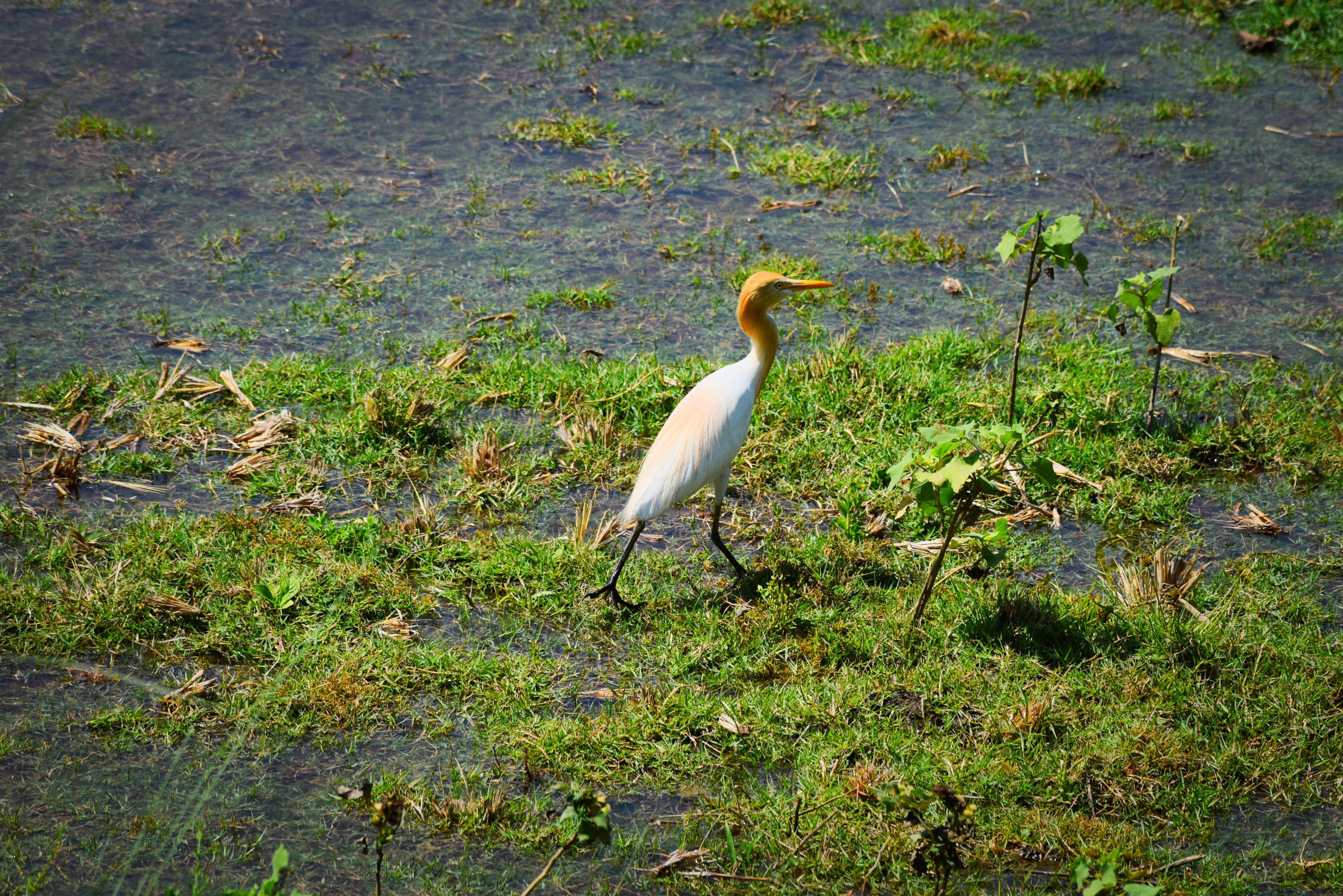 Gratis lagerfoto af fugle, Indien, landsby, natur