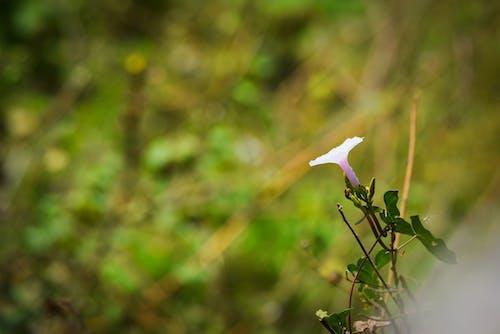 Free stock photo of flowers, india, nature