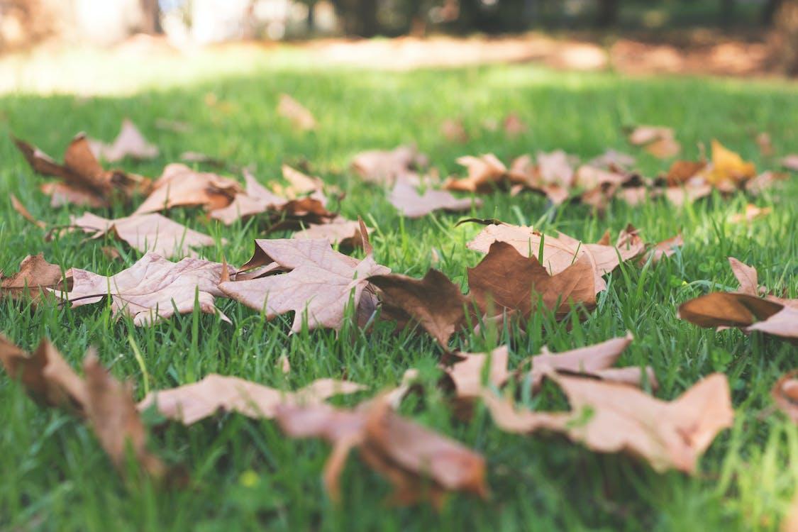 πεσμένα φύλλα, πτώση φύλλων, φύλλα πτώσης