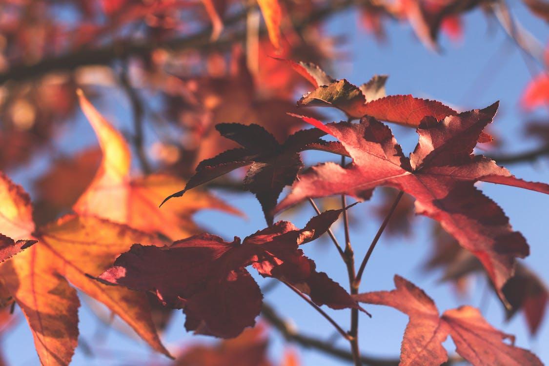 Gratis arkivbilde med fallblad, falne blader, høstløv