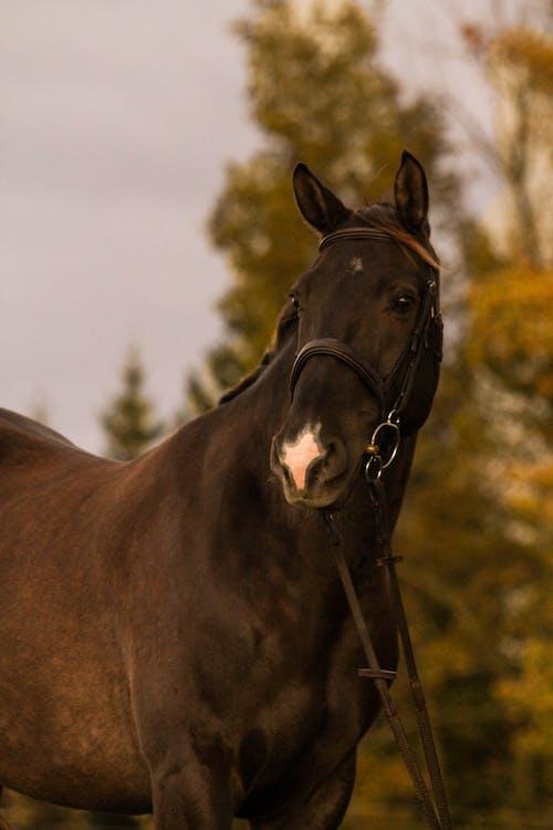 Ingyenes stockfotó állat, csődör, emlős, fekete ló témában