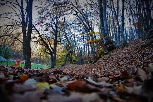 Kostenloses Stock Foto zu straße, dämmerung, landschaft, natur
