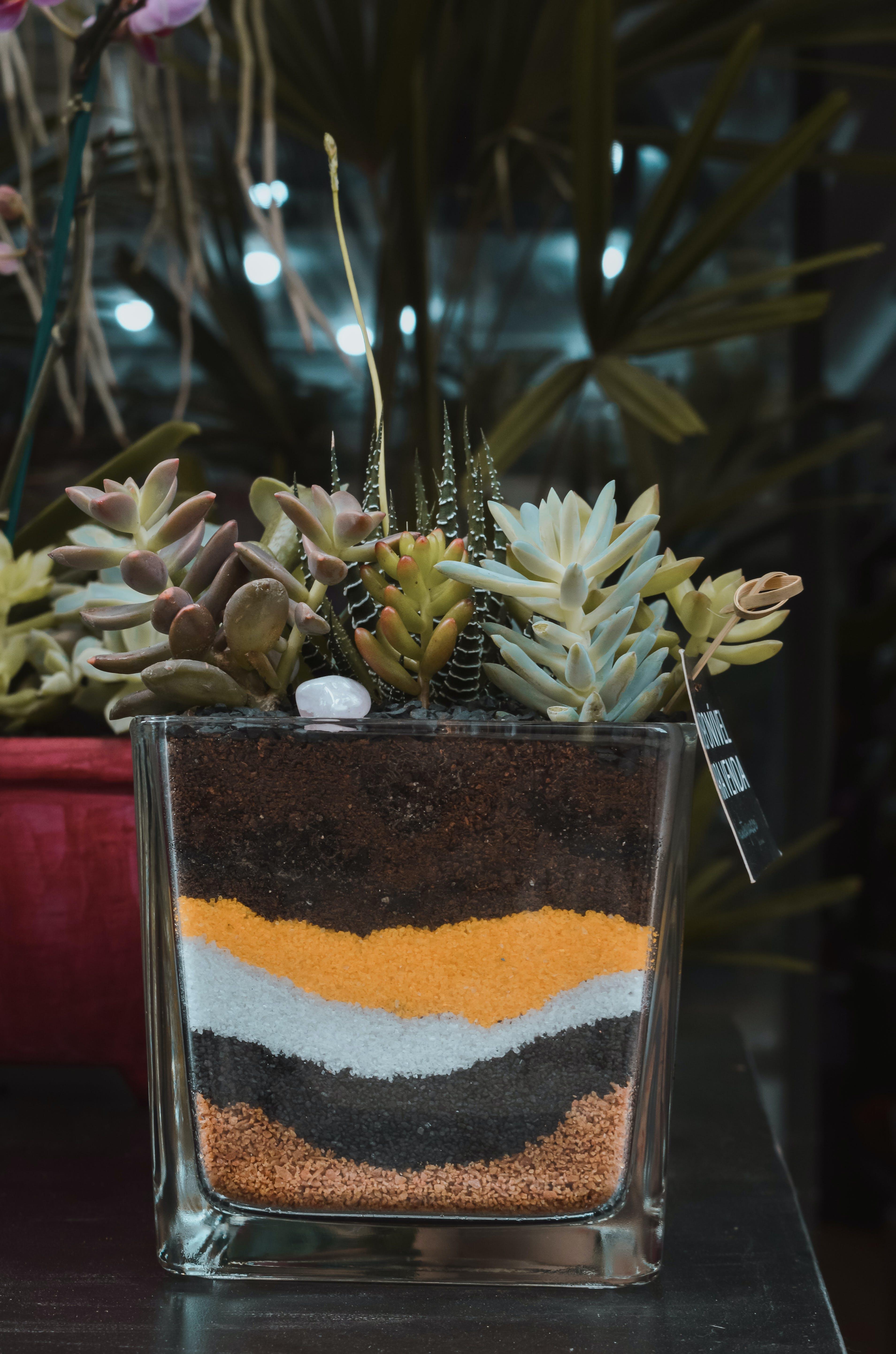 คลังภาพถ่ายฟรี ของ ซักคิวเลนต์, พืชสีเขียว, มีสีสัน