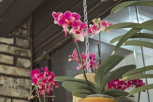 Základová fotografie zdarma na téma jarní květiny, jaro, krásné květiny, květiny