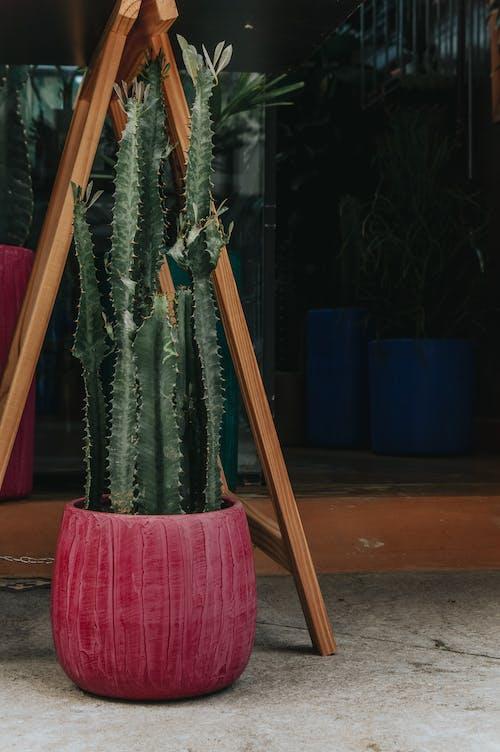 Darmowe zdjęcie z galerii z dekoracja, kaktus, kolczasty, roślina