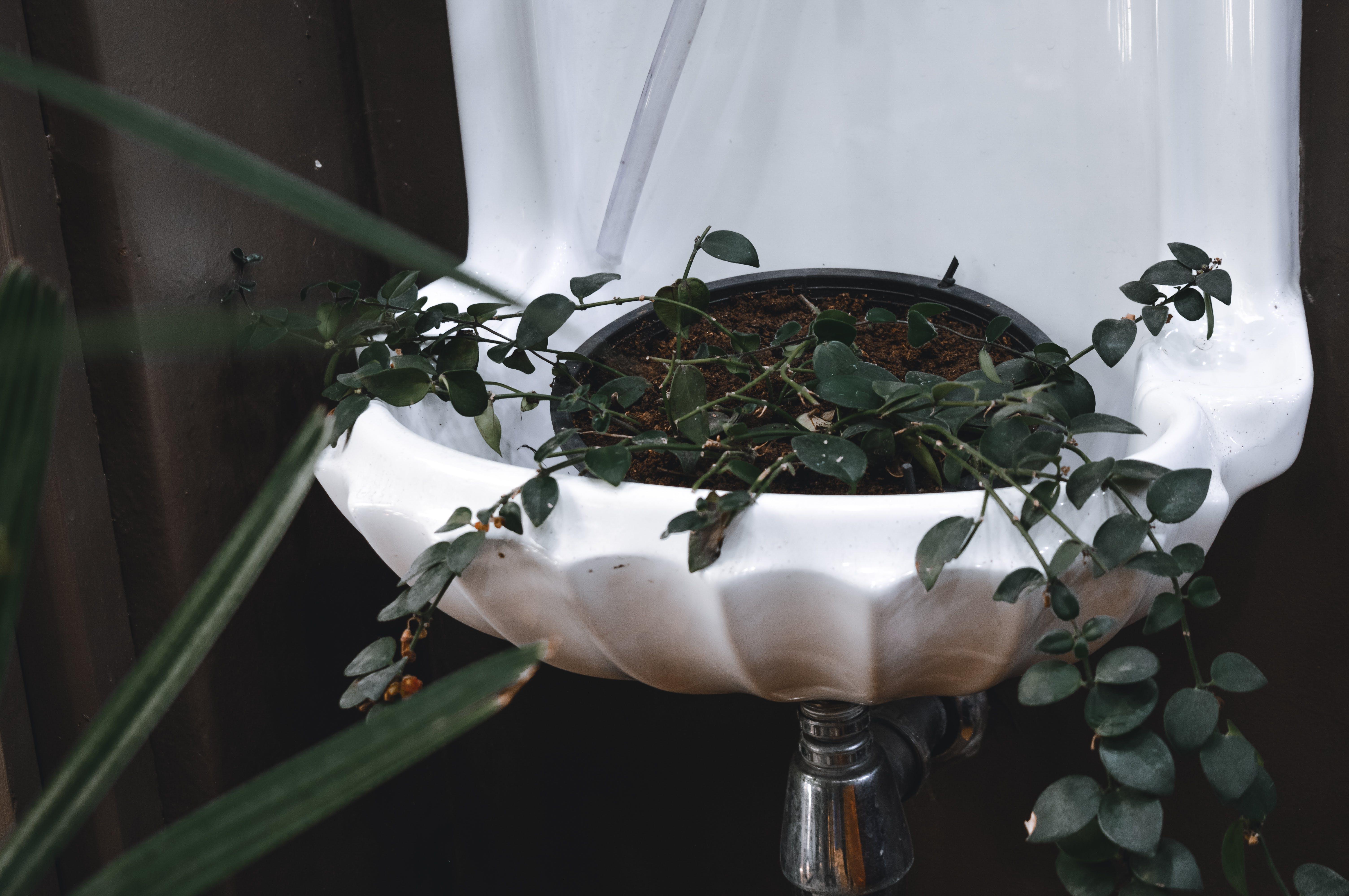 คลังภาพถ่ายฟรี ของ กระถาง, ต้นไม้, พืชกระถาง, ใบไม้