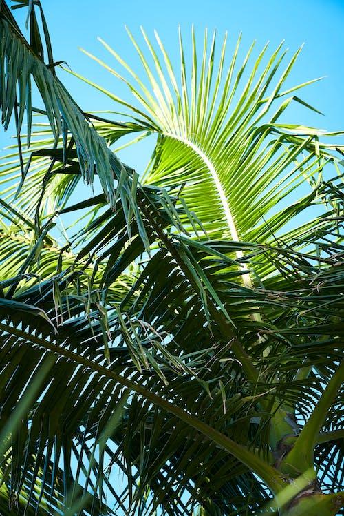 Бесплатное стоковое фото с зеленый, лето, небо, пальма