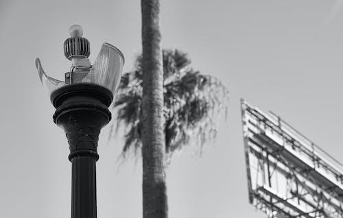 Foto d'estoc gratuïta de blanc i negre, ciutat, clareja, signe