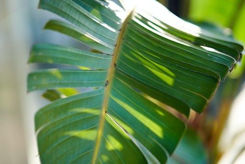 Foto d'estoc gratuïta de exòtic, fulla de palma, palmell, verd