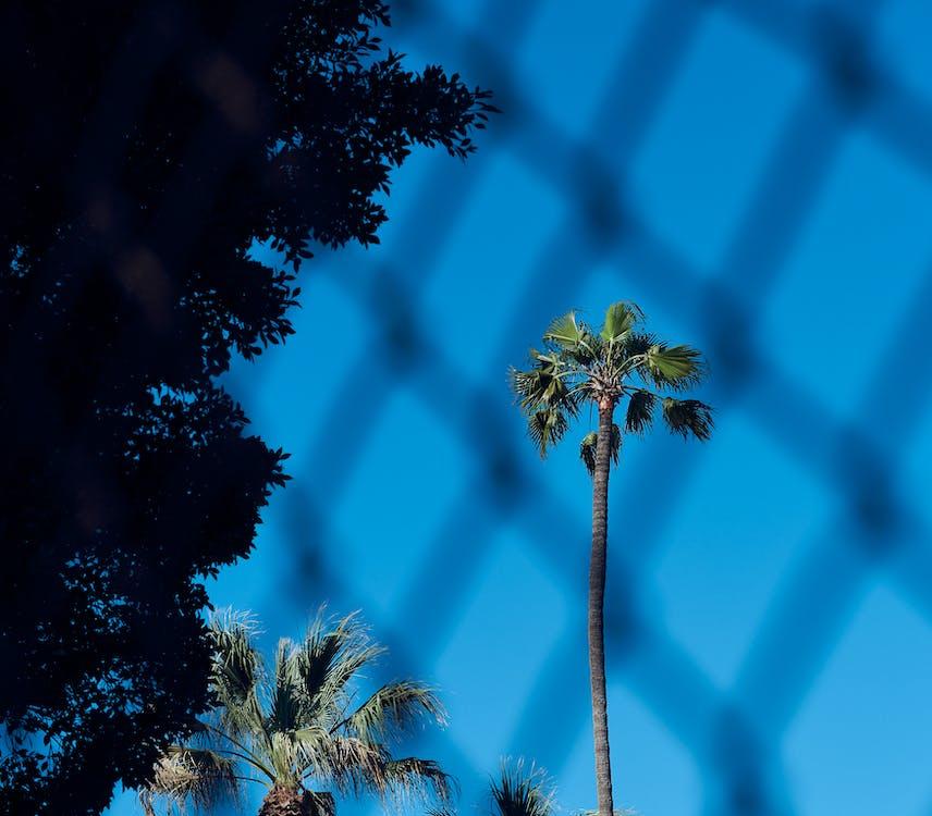 голубой, забор, небо