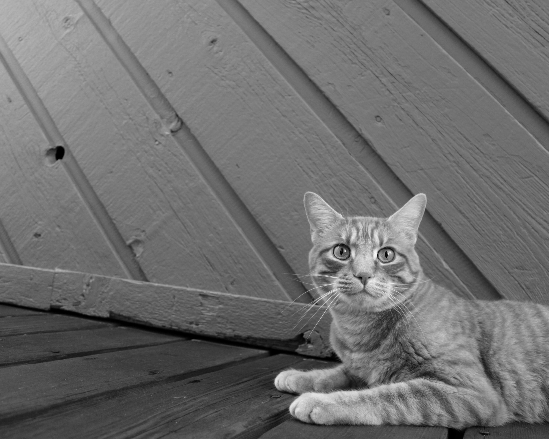 domáce čierna mačička obrázky