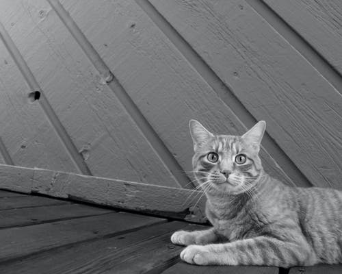 Grayscale Photography of Cat Resting Beside Wall