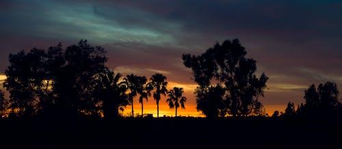 Безкоштовне стокове фото на тему «дерева, екзотичний, Захід сонця, краєвид»