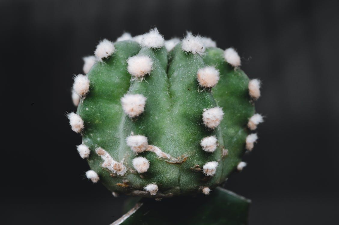 close-up, kaktus, kaktusplanter