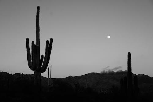 Photos gratuites de à contre-jour, arizona, cactus, désert