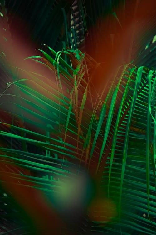 Ảnh lưu trữ miễn phí về Ấn Độ, màu xanh lá, thực vật