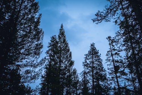 Foto d'estoc gratuïta de arbres, blau, bosc, cel