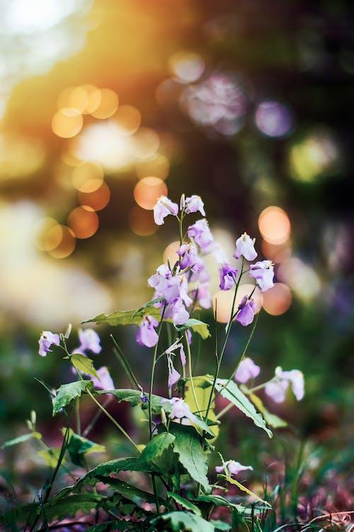 Безкоштовне стокове фото на тему «завод, квіти, квітка, флора»
