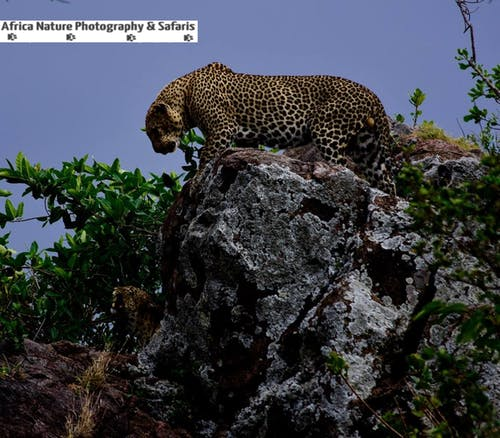 Free stock photo of africa safari, mount kilimanjaro, ngorongoro crater, photo tours