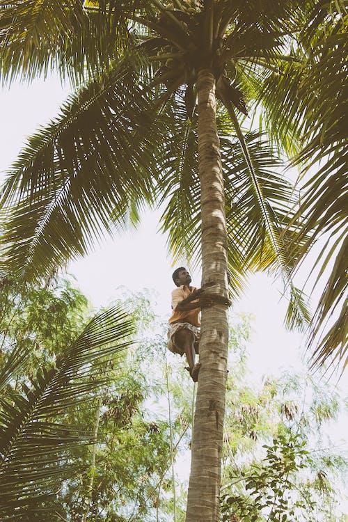 Photos gratuites de actif, arbre, cocotier, contre-plongée