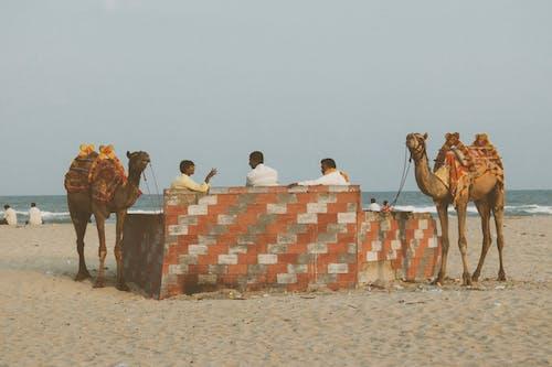 Photos gratuites de inde, tamil nadu
