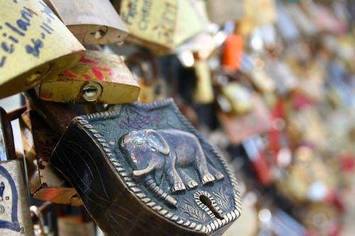 Foto profissional grátis de cerca, elefante, fechadura