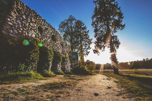 Ingyenes stockfotó barlang, fák, fény, lencsefény témában