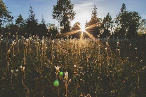 Imagine de stoc gratuită din arbori, câmp, flori, iarbă